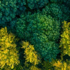 SATRee – Facilitating Tree Analysis and Management from the Sky