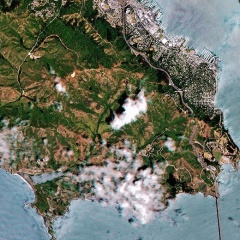 Forest Health Monitoring - Using AI and Satellites