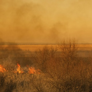 Zuri – An AI-Enabled Platform for Monitoring and Regulating Farm Fires in India